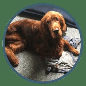 Hundeschule Hundetrainer Hundetagesstätte_Hundebetreuung_Hundebetreuung für Senioren