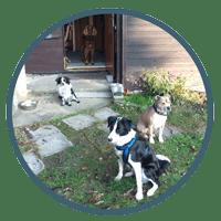 Hundeschule Hundetrainer Hundetagesstätte_Hundebetreuung in kleinen Gruppen