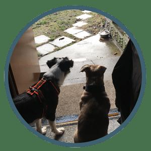 Hundeschule Hundetrainer Hundetagesstätte_Hundebetreuung_Hundebetreuung über Nacht und Urlaubsbetreuung