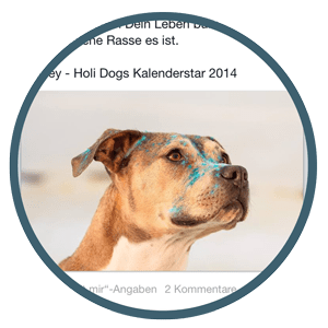 Das Team - Joey - Kalenderstar für den Tierschutz