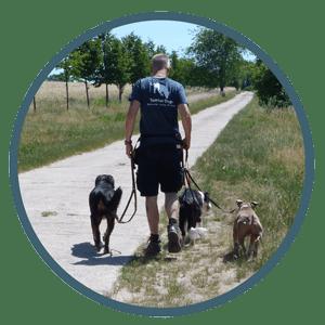 Bild Hundeführerschein in Berlin