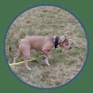 Über Tom - Hundetraining - Vorstehen