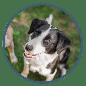 Bild Über Tom - Hundetraining mit Spaß