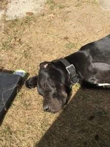 Betreuung in Hundetagesstätte: Samson sonnt sich