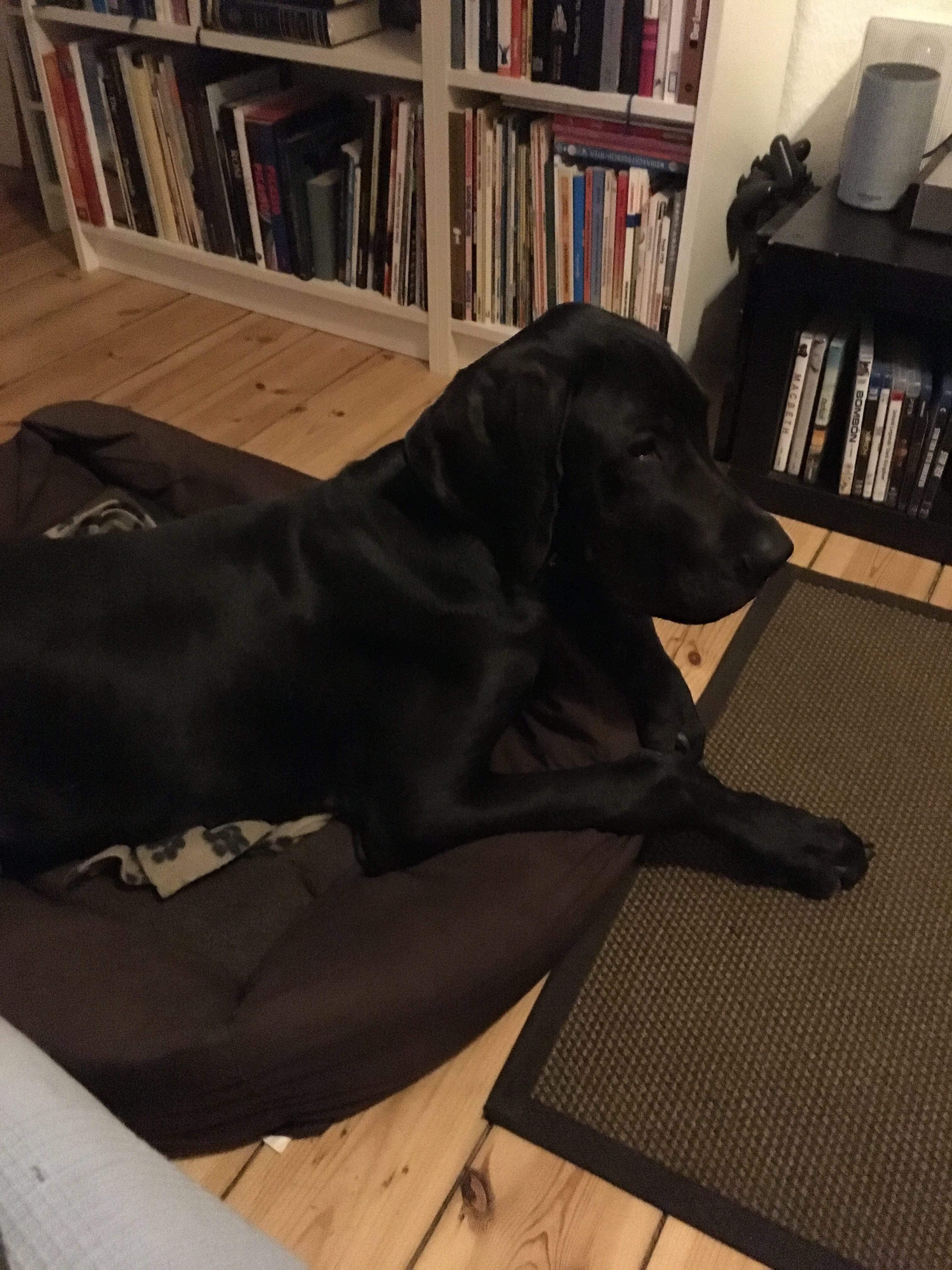 Hundebetreuung in Hundetagesstätte und über Nacht: entspannter Abend zuhause