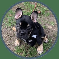 Welpenintensivbetreuung: in unserer Hundebetreuung finden auch die Kleinsten den richtigen Betreuungsplatz